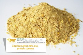 soybean meal 45