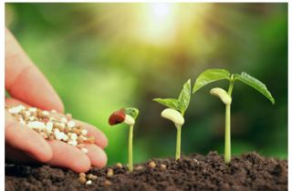 Why do plants need fertilizers?